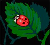 Petite coccinelle
