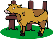As-tu vu la vache ?