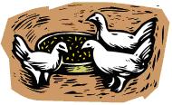 Quand 3 poules vont aux champs